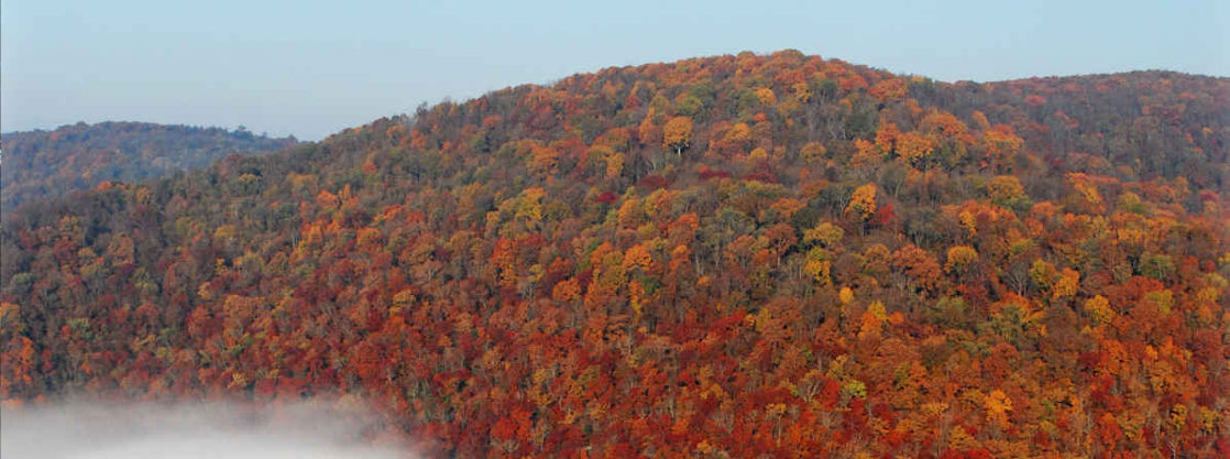 Large hillside covered with trees with fall colored leaves