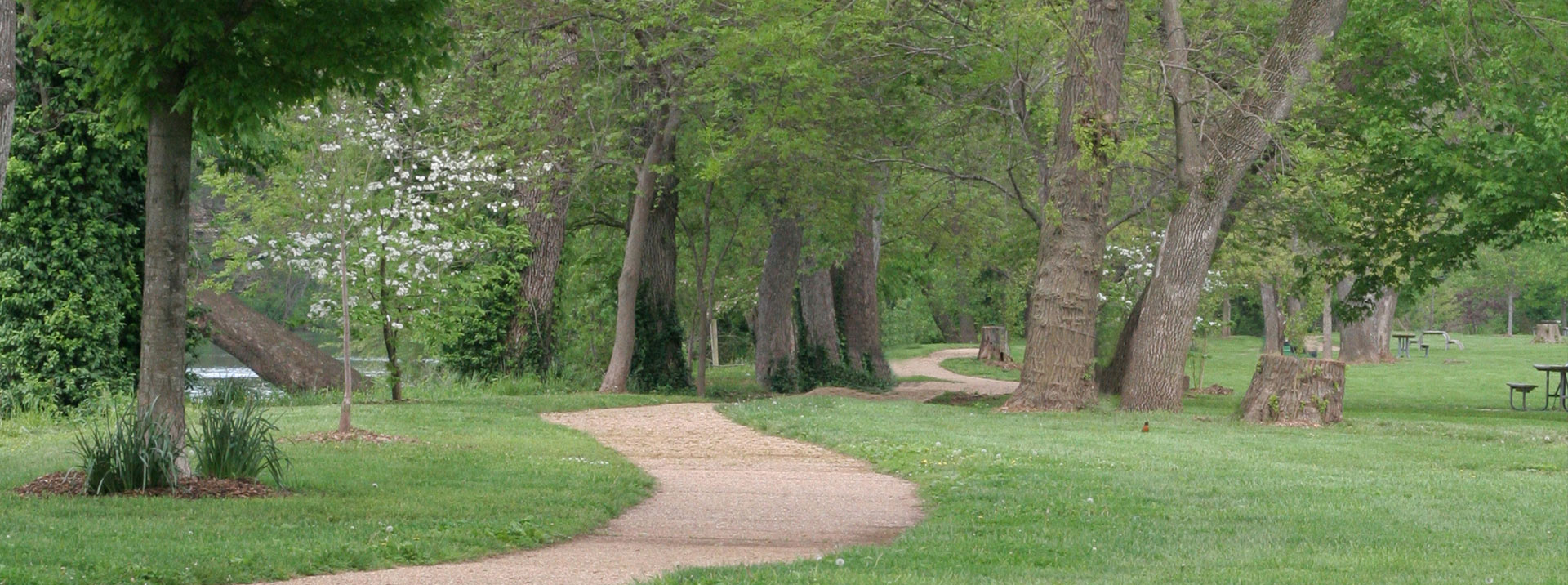 Pathway with trees and grass